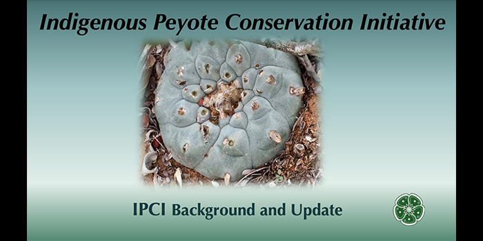 Indigenous Peyote Conservation Initiative